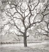 etude vineyards2