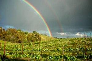 vineyard_13_RS