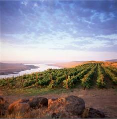 alexandria nicole winery