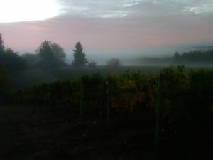 Earth vineyards