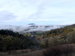 Willamette_Valley_fog