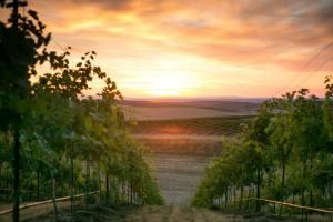 waterbrook winery