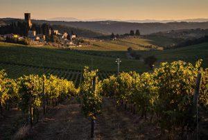 Tenuta vineyards