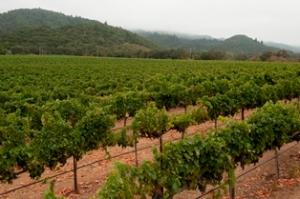 Markham vineyards_sm