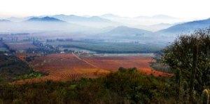 Koyle vineyards
