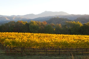 Photo courtesy of Chalk Hill Vineyards