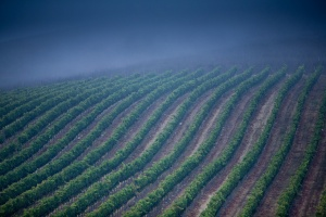 - Photo of Laetitia Vineyards