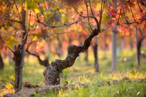 Photo courtesy of Vietti winery