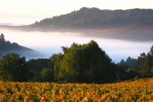 "Constant sunshine and natural ""air conditioning"" in the form of fog and breezes ensure world class grape and wine quality. Photo credit:  ""Wine Institute of California."""