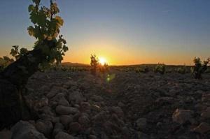 Bodegas Castano winery