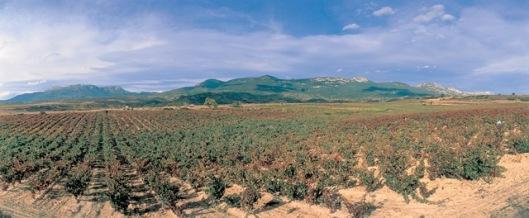 Photo courtesy of Ramon Bilbao winery