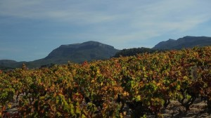 Photo courtesy of  Josep Grau Winegrowers