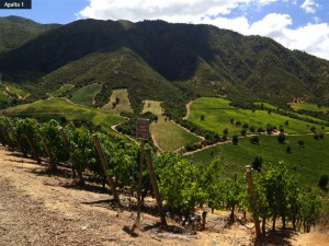 Photo courtesy of Montes Alpha winery.