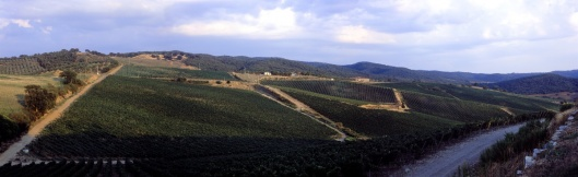 Photo courtesy of Belguardo winery.