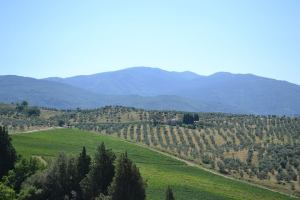 Photo courtesy of Frescobaldi winery.