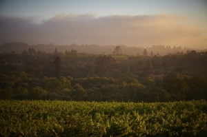 Davis Bynum winery