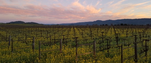 Hendry Vineyards.jpg