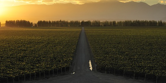 south-america-wine-header