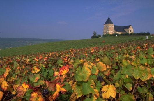 Vineyard-areas-in-France_Vineyards-in-France_5309