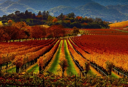 Sonoma-Wine-Country-California-CA-Fall-LocalGetaways1