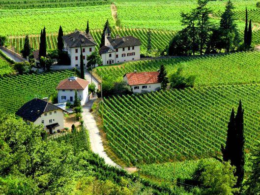 vineyards-Terlan-Trentino-Alto-Adige-Südtirol-Italy.jpg