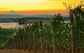 wine-success-stories-out-of-oregon