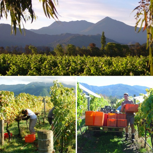 best-wineries-of-new-zealand-hans-herzog-estate-gear-patrol