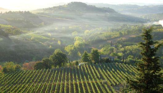 vineyard-sun