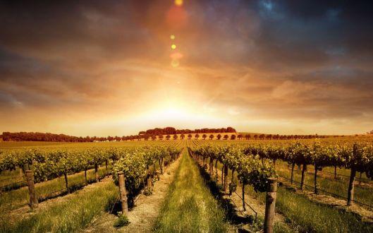 57021535-vineyard-wallpapers