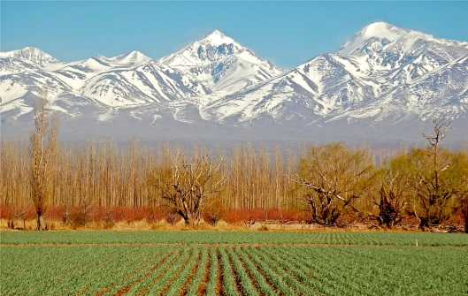 mendoza-vines-mountains