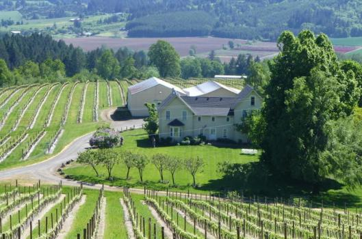 willamette-valley-wine-tasting-tour-from-portland-in-portland-185838.jpg