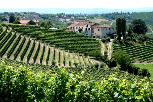Piemonte,_Italy_vineyards_with_village.jpg