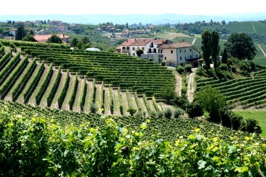 Piemonte,_Italy_vineyards_with_village.jpg