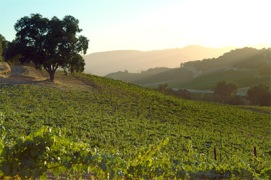 vineyard_photo_Halter Ranch