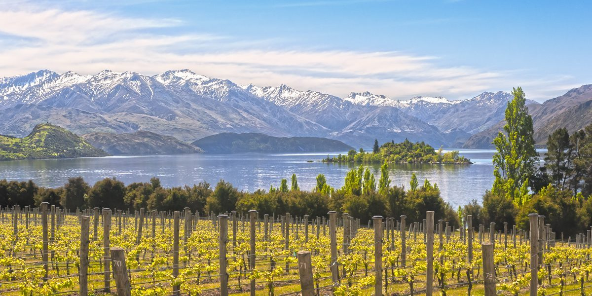 New-Zealand-winery