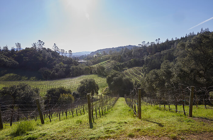 vineyards_geyserville_1_700x461