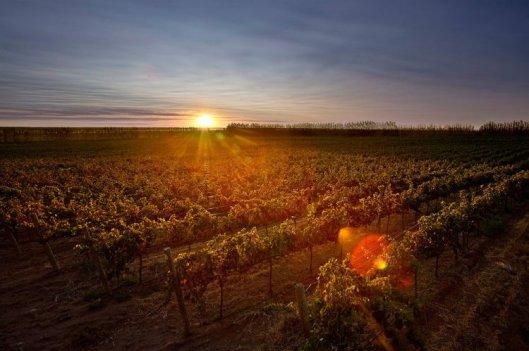 bodega-familia-schroeder-sunset-vineyard-rio-negro-patagonia-argentina-tourism-travel